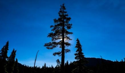 INNES Mountain Treeline