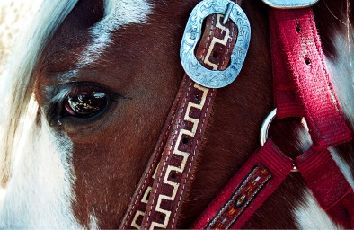 INNES red bridle