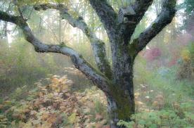 Mystic Tree WC copy